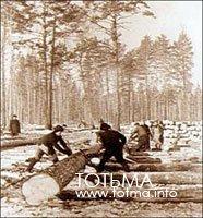 Раскряжевка хлыстов двуручной пилой. 1921-1924 гг.